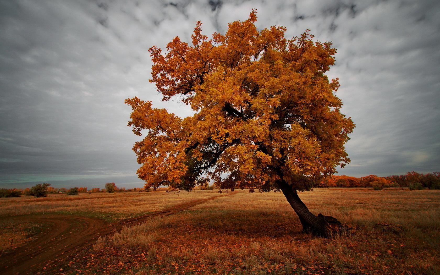 field in autumn tree